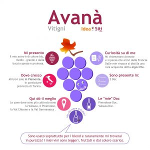 infografica avanà vitigno piemonte