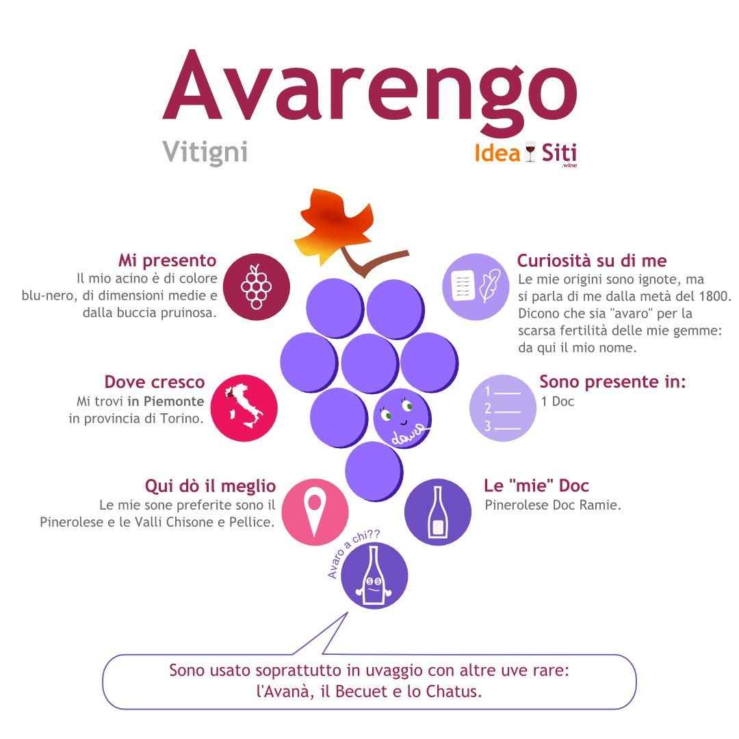 infografica avarengo vitigno autoctono
