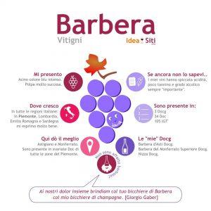 Vitigno Barbera infografica