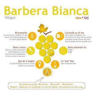 Barbera Bianca vitigno infografica