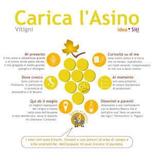 CARICA L'ASINO infografica