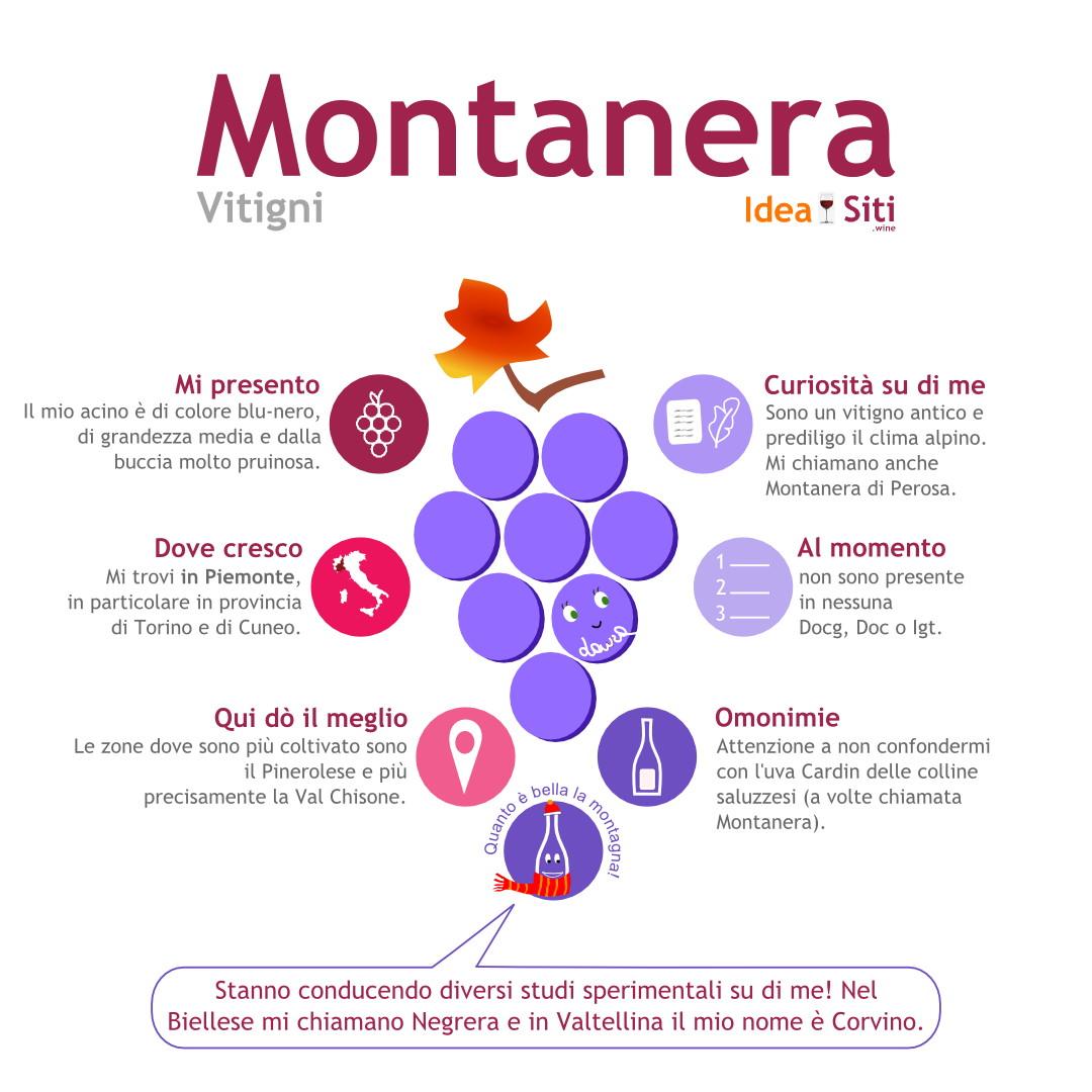 Montanera infografica vitigno piemonte