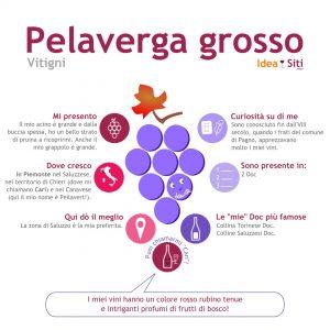 infografica vitigno pelaverga grosso